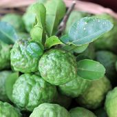 stock photo of leech  - Kaffir lime or leech lime on market tray - JPG