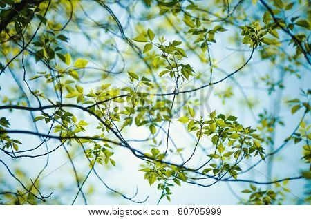 Detail of tree branche in spring