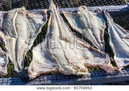 Split cod drying on a rack near Trinity, Newfoundland, Canada