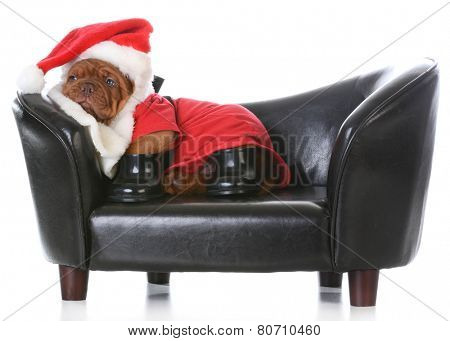 tired santa - dogue de bordeaux dressed up like santa on a couch