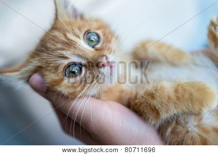 Portrait of kitty cat in hands