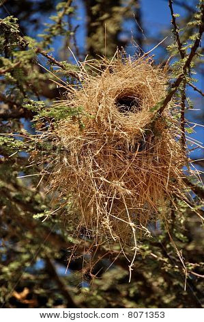 Weaver Bird Nest