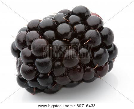 Blackberry Isolated