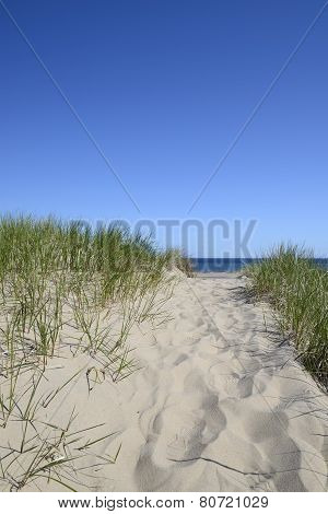 Path to Beach on Sunny Day
