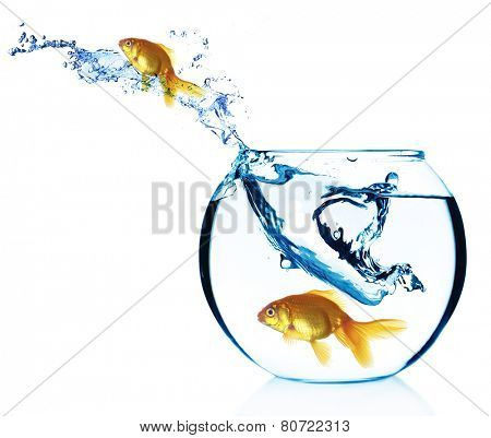 Goldfish jump out from aquarium isolated on white