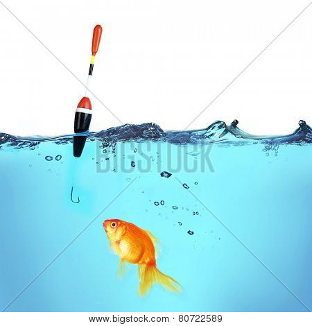 Fishing a goldfish, isolated on white