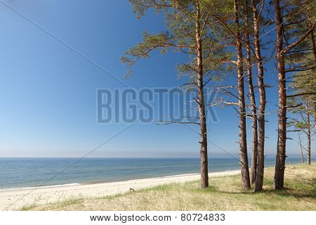 Baltic Shore Scenic