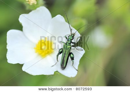 Green Insect On A Flower