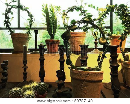 Green Plants In Clay Pots Decorating A Window