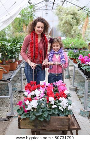 Mother and daughter driven cart with beauty flower in the greenhouse