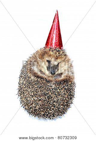 Forest Hedgehog In A Festive Cap Isolated