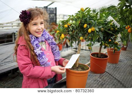 Happy little girl standing next to a small tree citrus cumquat in the greenhouse