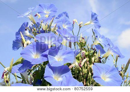 Flower-gramophone