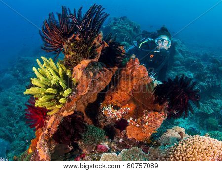 Female SCUBA diver next to feather stars