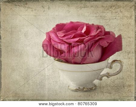 Red rose in a tea cup