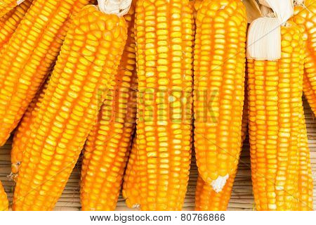 Orange Dried Corn Background For Animal Feeding
