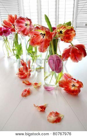 Colorful spring tulips in old milk bottles