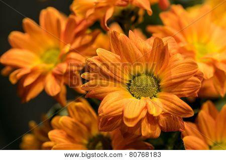 Daisy Flowers Bouquet Chrysanthemum