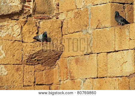 Pigeons on wall in Caesarea Maritima National Park
