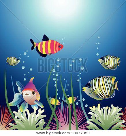 Aquarium und bunte Fische