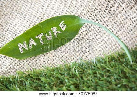 Green Leaf Put On Grass