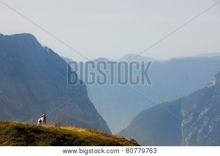 Dalmatian Dog On A Mountaintop