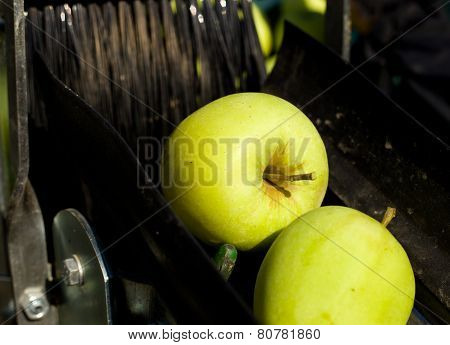 Apple Harvesting Machine