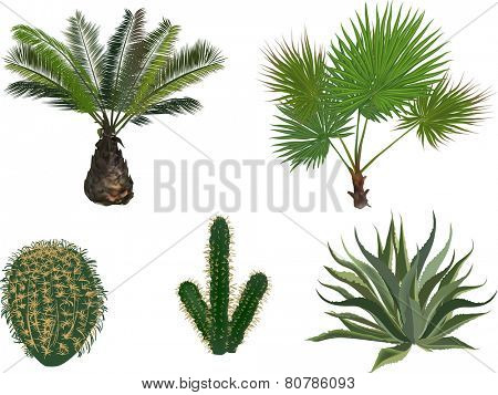 illustration with palm and cactus isolated on white background