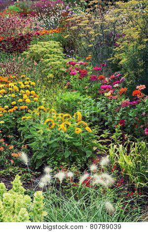 Summer Meadow Full Of Flowers