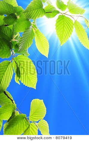 Leaf And Blue Sky
