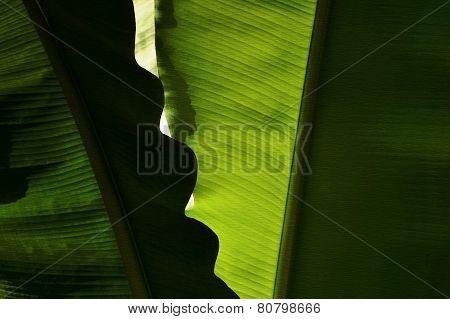 Zip tropical leaves