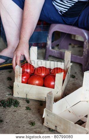 put tomatoes inside wooden basket