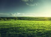 stock photo of cloud forest  - field of spring grass and forest  in sunset time - JPG