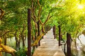 image of bridge  - Tropical exotic travel concept  - JPG