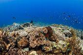 stock photo of damselfish  - Beautiful colorful - JPG