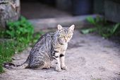 stock photo of track home  - grey cat sitting on track at home - JPG