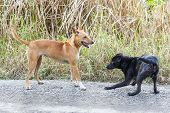 stock photo of stray dog  - Close up dirty stray dogs playing together on street at day time