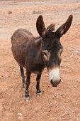 image of wild donkey  - Brown donkey at field at summer - JPG