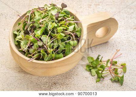 organic micro greens (kale, mustard, pea, herbs) on a  primitive wooden scoop against grunge bran wood