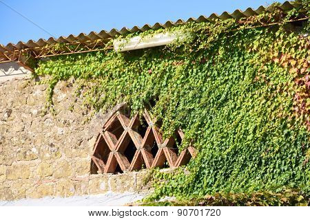 Ivy on old Italian house