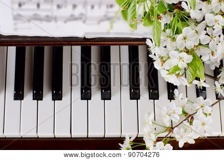 the blossoming cherry on a piano