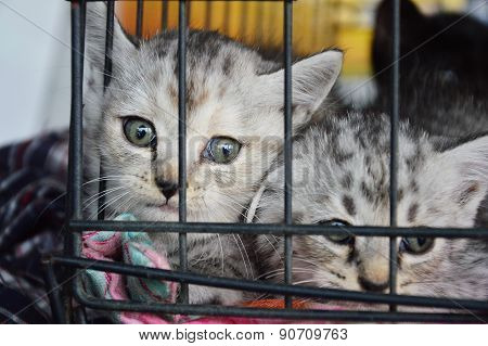 kitten in the cage