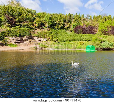 Forest Lake With White Swans