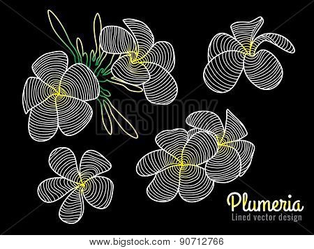 Abstract vector art lined design (white yellow Plumeria flower)