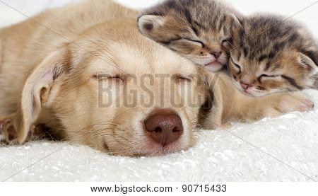 Puppy And Kittens Sleeping Together