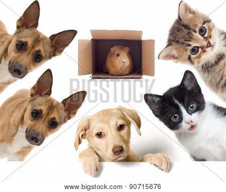 Set Pet Looks