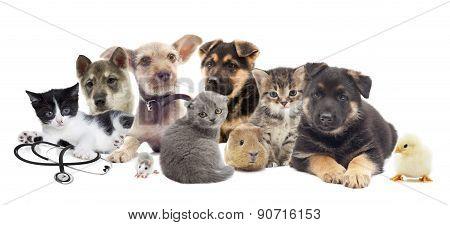 Set Pets