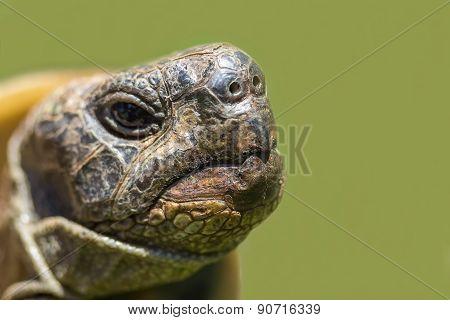 Turtle Close Up.