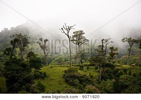 Tall Cloud Forest Trees