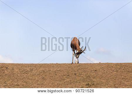 Buck Standing Sleeping Wildlife